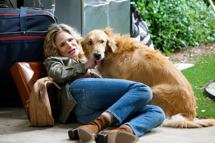 The dog is the best part of Kyra Sedgwick's 'Call Your Mother'